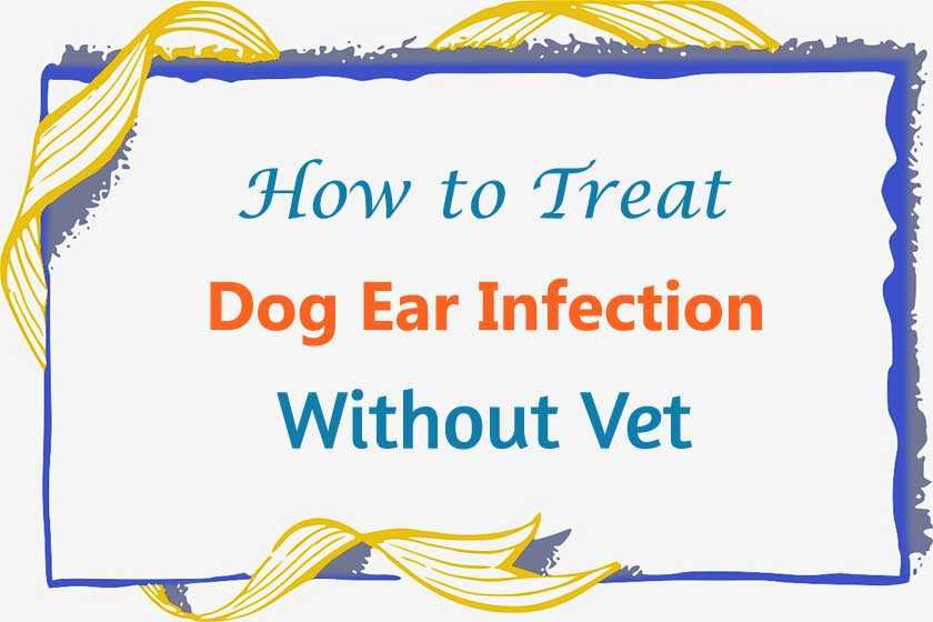 How to Treat Dog Ear Infection Without Vet?