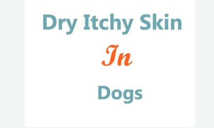 Dry Itchy Skin in Dogs