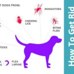 How to Get Rid of Ticks and Fleas On Dogs?