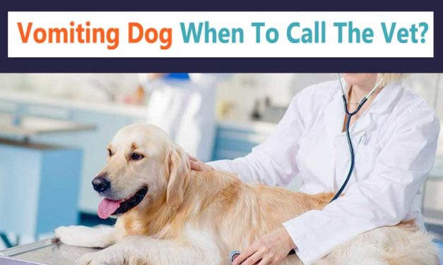 Vomiting Dog When To Call The Vet