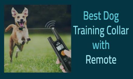 Best Dog Training Collar With Remote