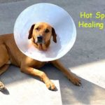 Dog Hot Spot Healing Time