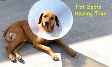 Dog Hot Spot Healing Time