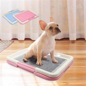Potty Training a Stubborn Puppy